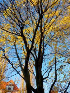 Herbstbaum2