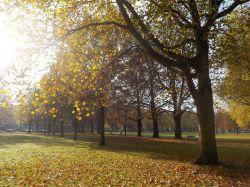 Herbstsonne1
